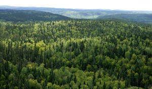 Forest-replantation-print-industry